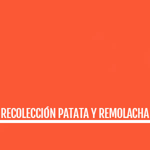 RECOLECCION PATATA Y REMOLACHA